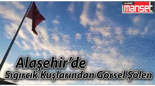 Alaşehir'de Sığırcık Kuşlarının Muhteşem Dansı