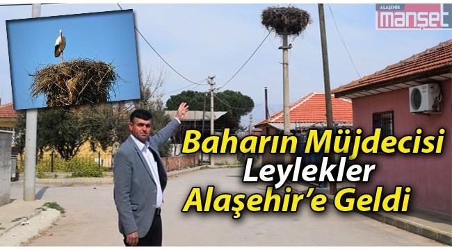 Baharın Müjdecisi Leylekler Alaşehir'de