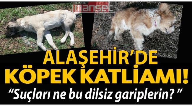 Alaşehir'de Köpek Katliamı!