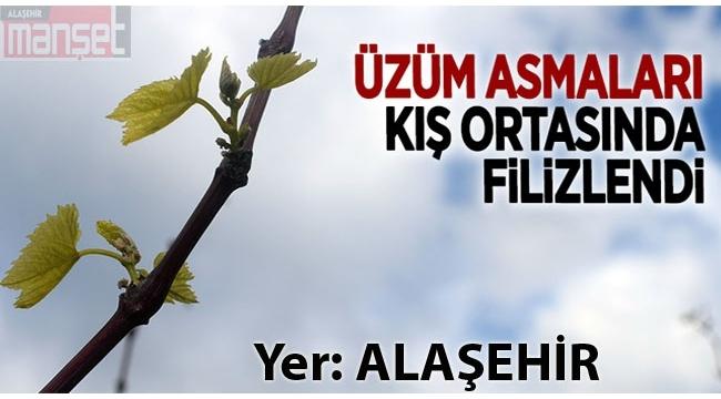 Alaşehir'de Üzüm Bağları