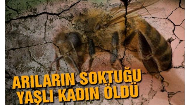 Arıların Soktuğu Yaşlı Kadın Hayatını Kaybetti